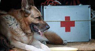 İzmit Depreminden 82 Saat Sonra 3 Yaşındaki Kızı Enkazdan Çıkartan Kahraman Köpek Mancs