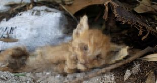 Antalya'da Yine Kedi Cinayeti İşlendi