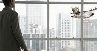 Kedim Camdan Düştü İnsanları