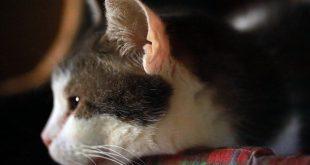Kedilerle İlgili Çözülememiş Bir Gizem: Henry'nin Cebi