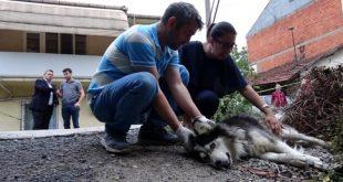 Çişini Yaptığı İçin Sahibiyle Birlikte Tüfekle Vurulan Köpek Hayatını Kaybetti