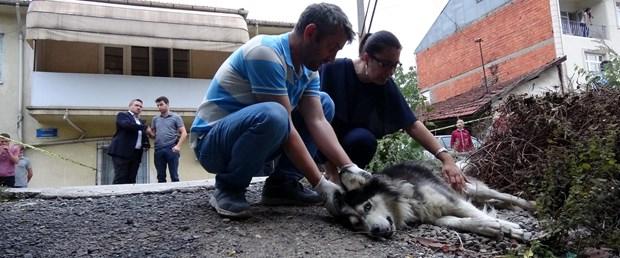 Milas Önder Gazetesi Sokak Köpeklerini Hedef Gösterdi 92