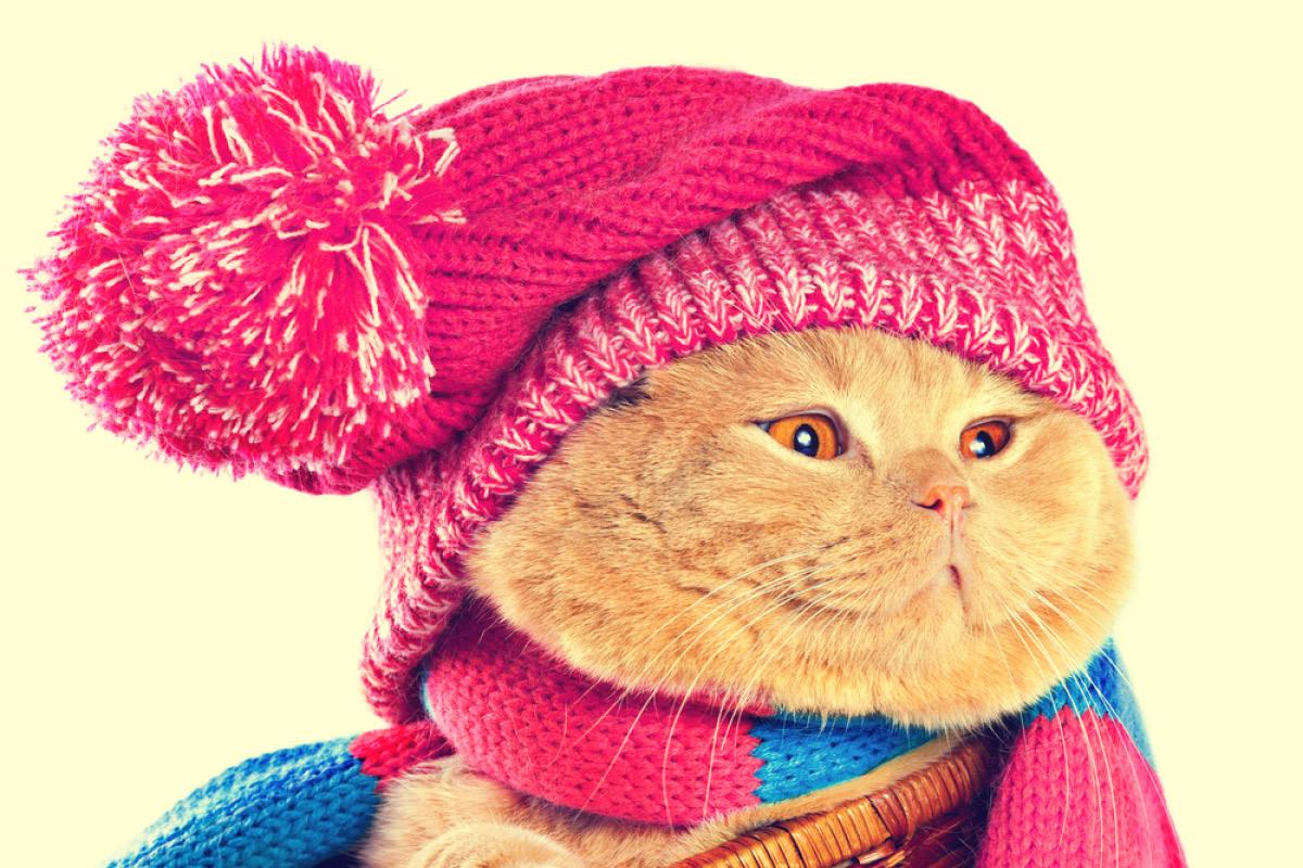 Kedileri Giydirmenin Zararları
