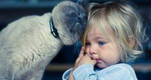 Kediler Neden İnsana Kafa Atar?