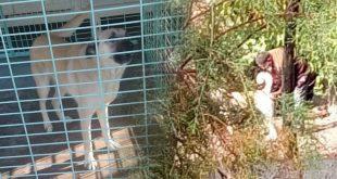 Çorum'daki Tecavüz Davasının Mağduru Köpek Hapsedildiği Barınakta Öldü!