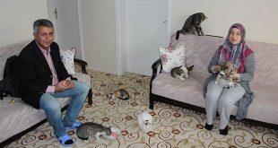 Sokak Kedilerine Evlerini Açtılar