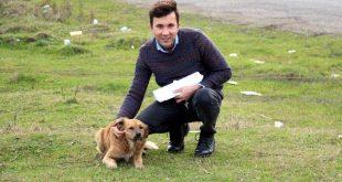 Zonguldak'ta Sokak Köpekleri Ä°ÄŸne Ä°le UyuÅŸturulup Diri Diri Gömüldü Ä°ddiası