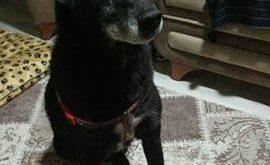 Kimsenin İstemediği Yaşlı Ve Gözleri Görmeyen Köpeği Kurtaran 13 Yaşındaki Kahraman