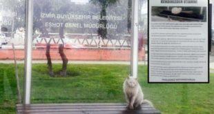 Durakta İstenmeyen Kedi İçin Hayat Dersi Gibi Yazı