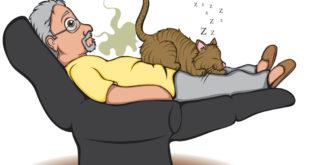 Kediler Neden Çok Osurur?