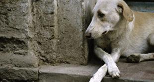 Terk Edilmenin Köpekler Üzerindeki Etkileri