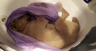 Köpeği Öldürüp Banyoda Sakladı!
