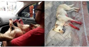 Kocaeli'de Tüfekle Köpeği Öldürdüğü İddia Edilen Müezzin Serbest Bırakıldı