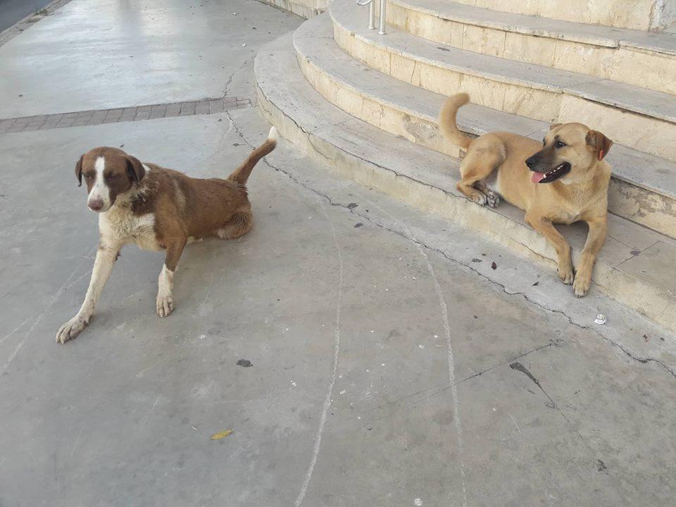 Bodrum'da Sokak Köpeklerine Ve Köpeklere Bakan Gönüllüye Saldırı
