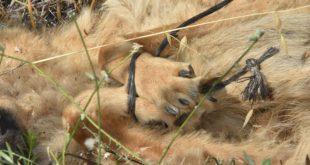 Hayvana Şiddete Hapis Cezası Geldi Mi Gelmedi