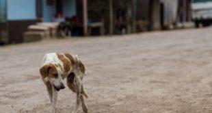 Köpeklerden Başka Derdi Kalmayan İnsanlar..
