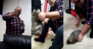 İş Adamı Kediyi Sopayla Dövdü