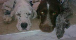 Orjan Sitesi'nde Köpekler Öldürüldü!