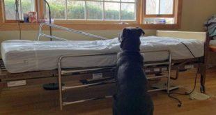 Sahibinin Öldüğünden Habersiz Köpek Yatağının Başında Geri Dönmesini Bekledi