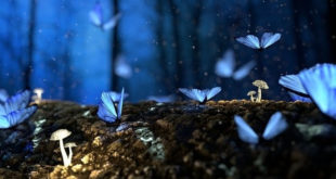 Mavi Kelebeklerin Hikayesi
