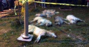 Ankara'da köpekleri zehirleyenlere beş yıl hapis cezası istendi